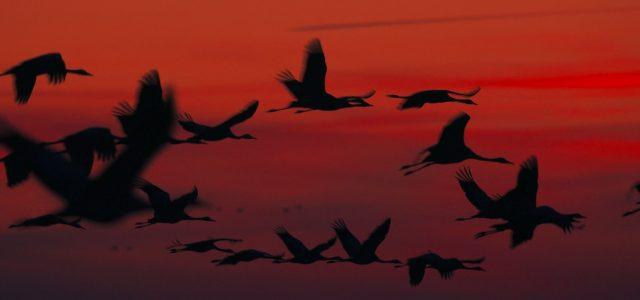 EDUCATIONAL FILM ABOUT THE NATURE OF THE CRANES   LENGTH: […]