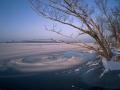 Zimowy poranek nad Wisla - okolice wsi Kobylnica (gm. Maciejowice, pow garwolinski, woj. mazowieckie)